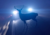 Autounfall durch Wildwechsel - Hannes R. aus Hof: