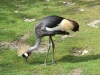 Kranich entflogen - Zoo bittet um Mithilfe der Bürger - Dringende Meldung !!!