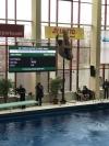 46. Halloren-Pokal in der Schwimmhalle Neustadt / Bäder Halle GmbH sorgt für ideale Wettkampfbedingungen