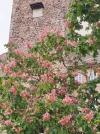 Himmelfahrt, Sonnenschein , ein Blauglockenbaum und ein Schloss ! - Auf zum Tag der offenen Schlösser zum Pfingstmontag !