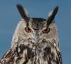 Europäische Ornithologen kommen nach Halle